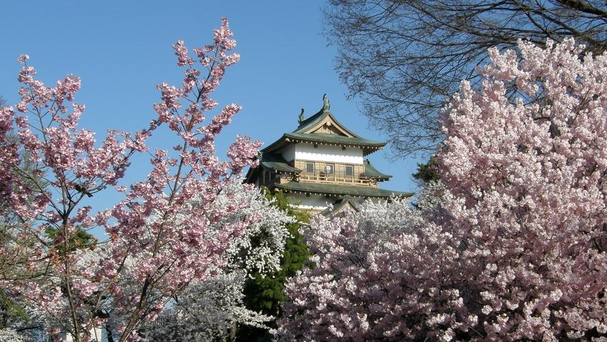 高島城の桜 美しい桜と荘厳なお城とのコントラストが素晴らしいです