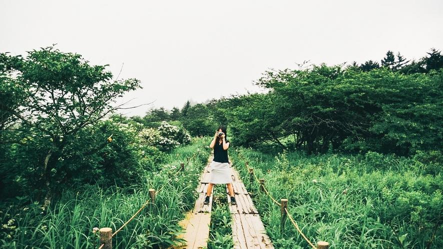 八島ヶ原湿原~遊歩道の散策がおすすめです