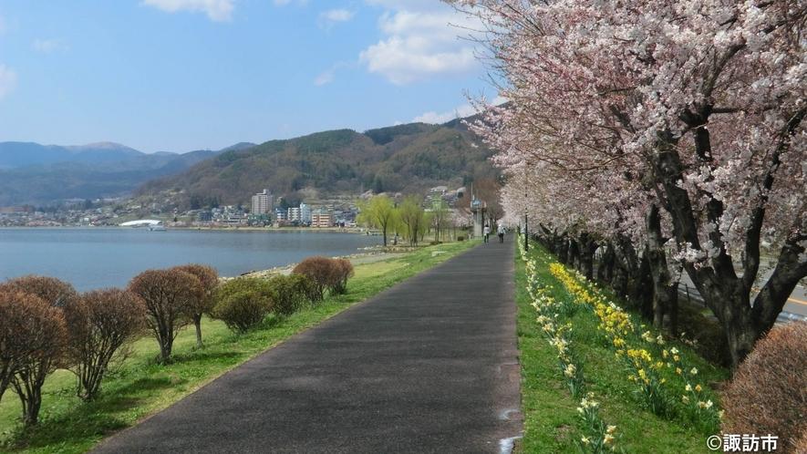 諏訪湖 桜の風景