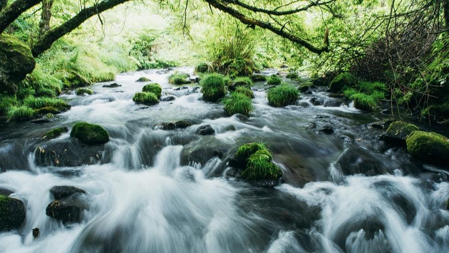 蓼科大滝~苔むした原生林を通っていくとたどり着く大滝