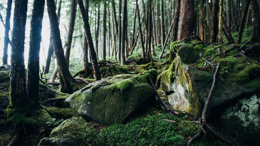 白駒池 北八ヶ岳の原生林の中の神秘的な湖