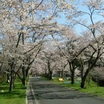 関 寺尾千本桜