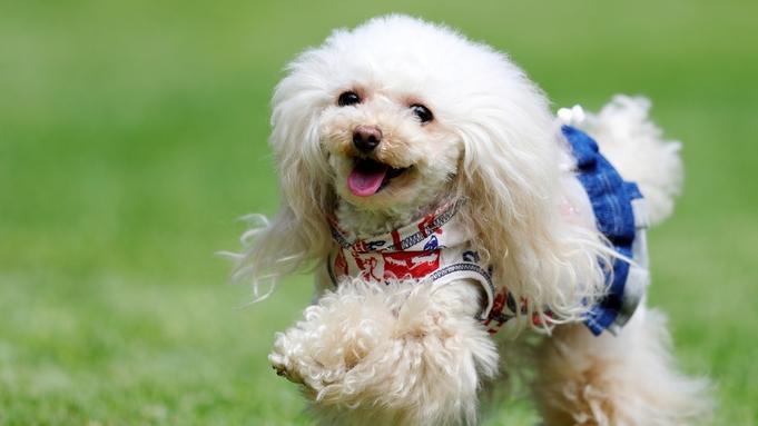 【小型犬同室OK】1日1組限定!ペットと記憶に残る温泉旅行☆<朝/夕お部屋食>