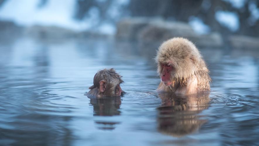 野猿の入浴で有名な「地獄谷野猿公苑」までは徒歩30分