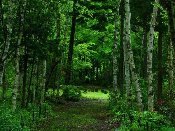 自然散歩村