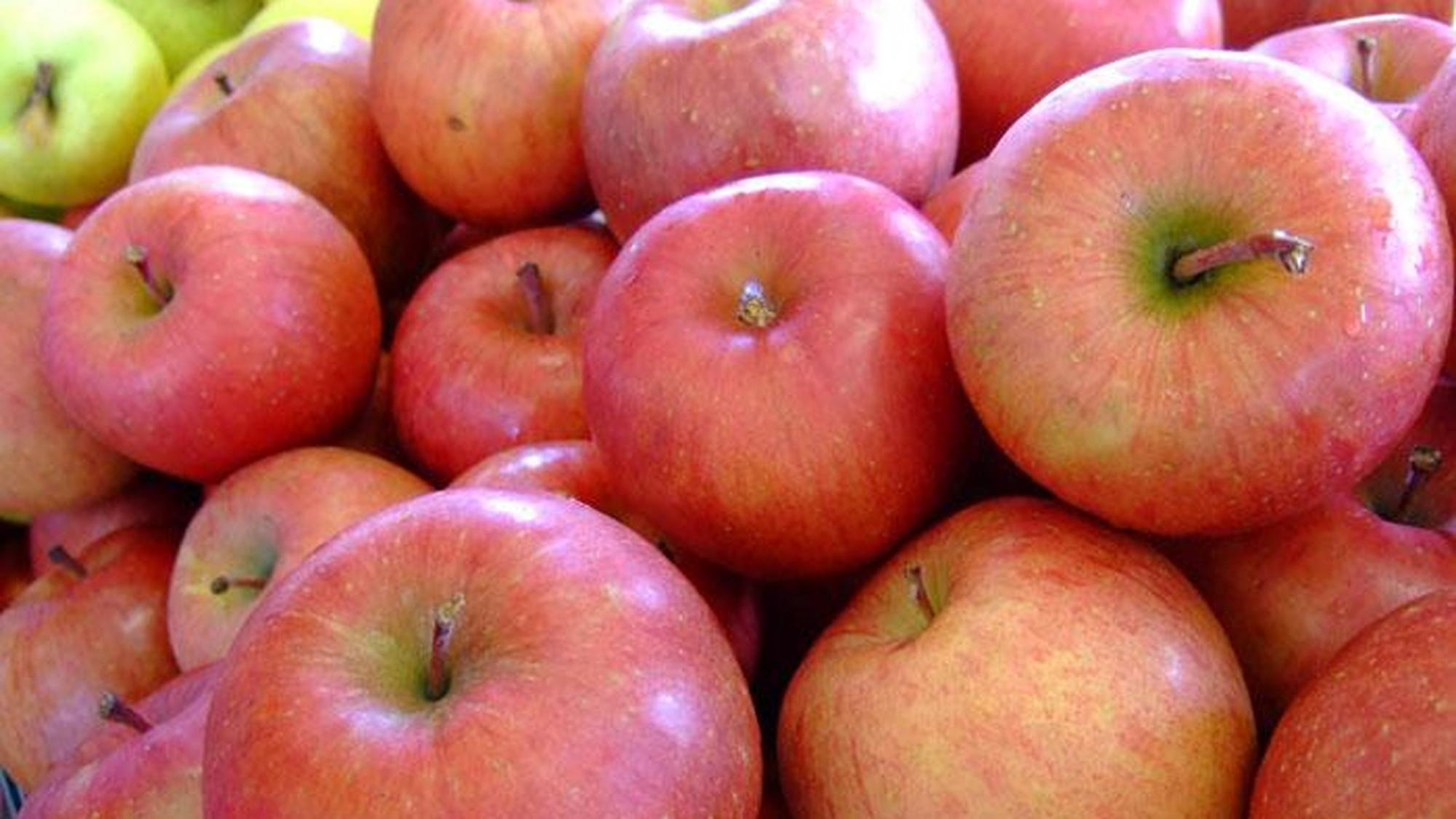 信州のりんご狩り イメージ