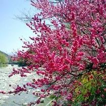 花桃と清流