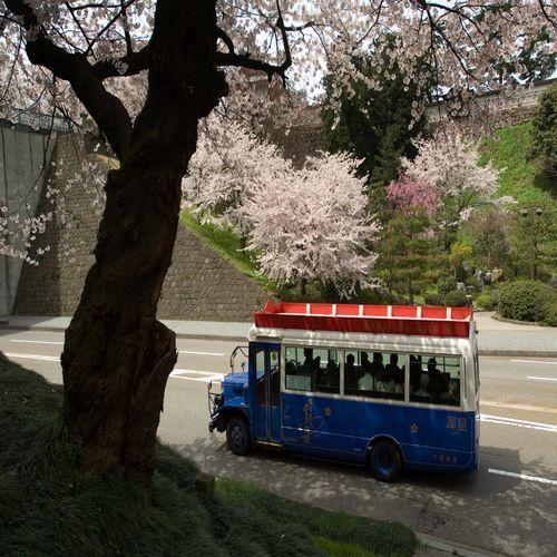 城下町周遊バス 桜