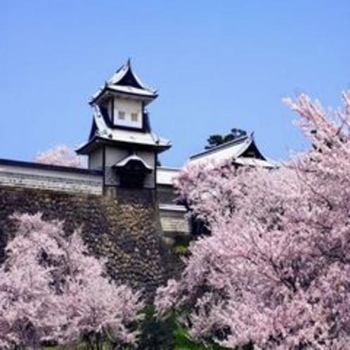 金沢城 桜