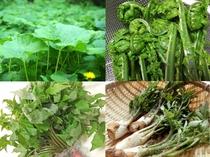 6月までの山菜一例