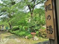 【新緑の貸切露天風呂】『楓(かえで)の湯』のまわりは美しい緑に彩られる季節です