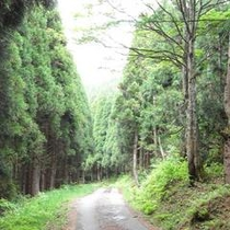 当館前の山道