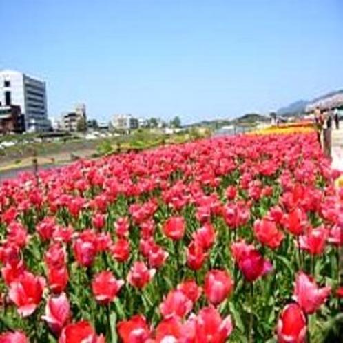 ◆直方市・チューリップフェア(春)車で20分◆