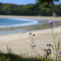 弓ヶ浜と花