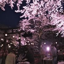【夜桜お花見大宴会】春イベント