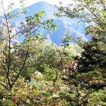 新緑の武甲山