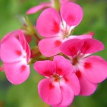 季節のお花でおもてなし