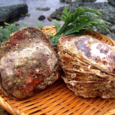 【夏企画】会席料理コース+おおき〜な天然岩カキが一個付いたプラン♪