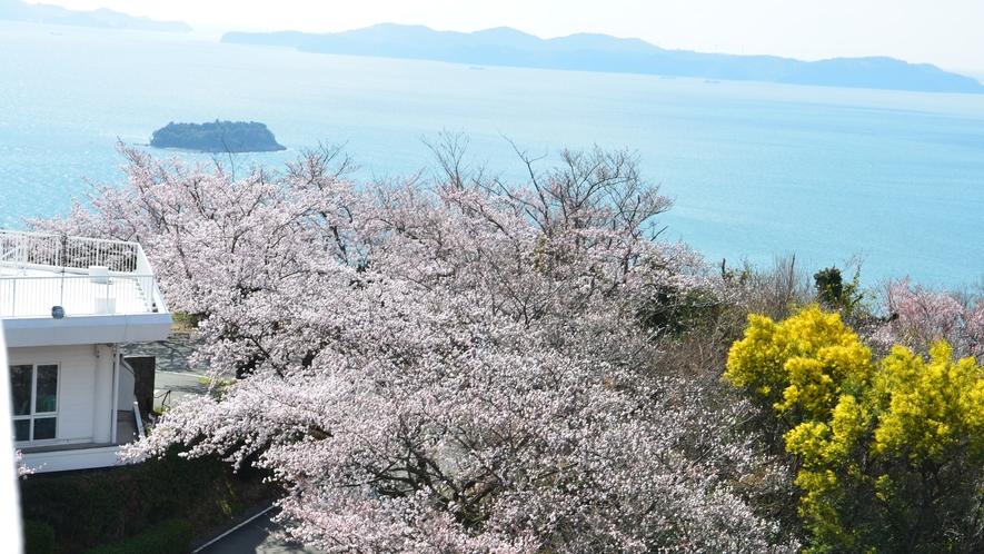 展望台、桜の咲く季節には海と淡いピンクのコントラストがとてもきれいです。