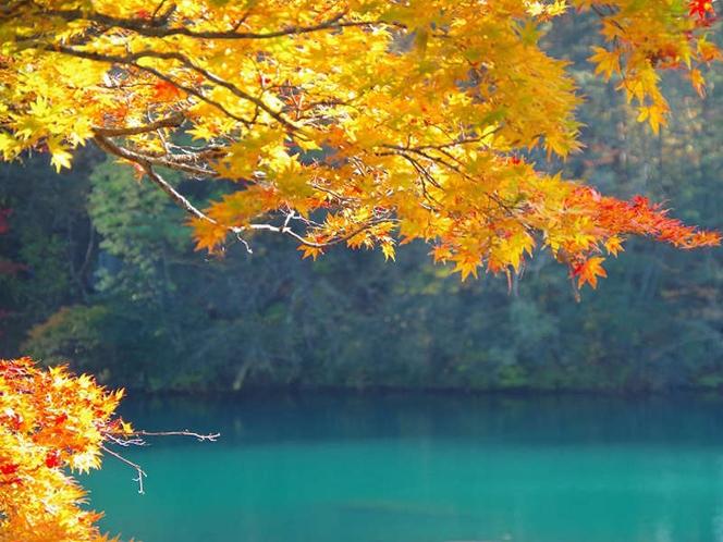 【裏磐梯 五色沼】エメラルドグリーンの幻想的な沼で手漕ぎボートも楽しめますよ(当館より車で約1時間)