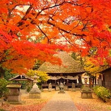 智識寺/11月初旬から紅葉の見頃を迎えます。当館から車で10分です。