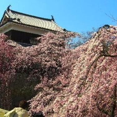 上田城敷地内、「真田丸」の大河ドラマ館にもお出掛けください。