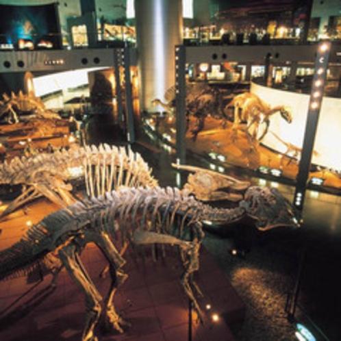 *恐竜博物館 500x500