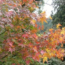 園地内の紅葉