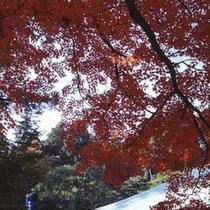西山興隆寺1