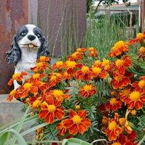 *【館内一例】季節によっては、色とりどりの花々が皆様をお迎えいたします。