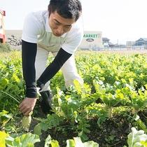【自社農園】支配人自ら収穫☆