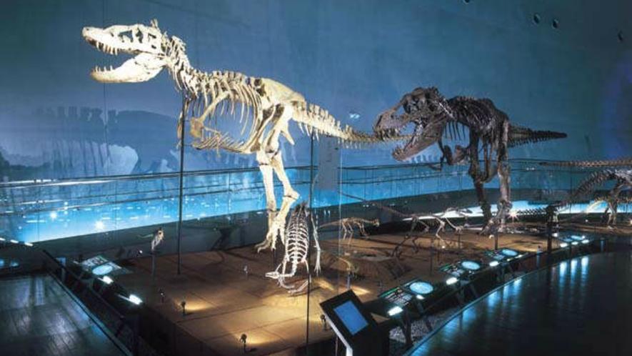 *恐竜博物館は迫力満点で楽し~い!!