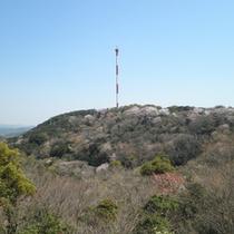 *周辺観光:宇和海展望タワー(当館より車で10分)