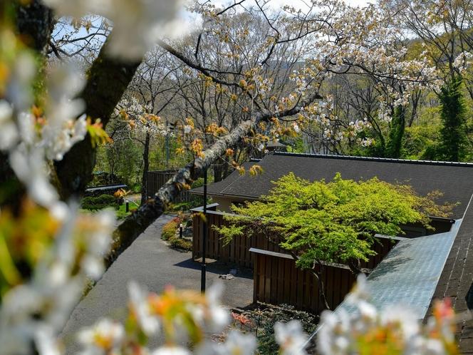 春 満開の山桜
