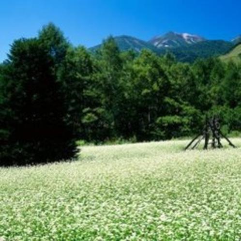 ◇そば畑と乗鞍高原・信州らしい景色