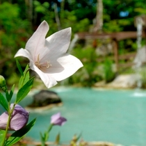 ◇夏・可憐な花咲く野天風呂