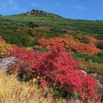 ◇乗鞍高原の紅葉
