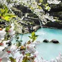 ◇山桜を愛でながらの大野天風呂