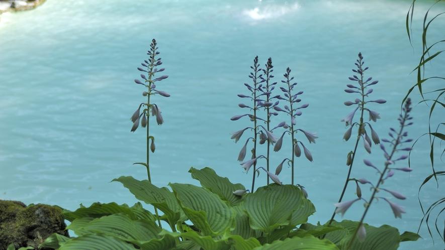 ・【夏】花々も彩を添える夏の野天風呂