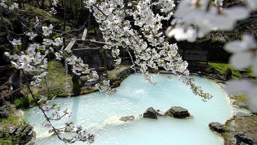 ・【春】山桜を愛でながら