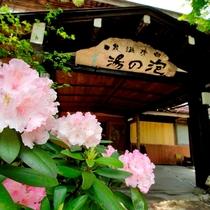 ■花に彩られる初夏の玄関