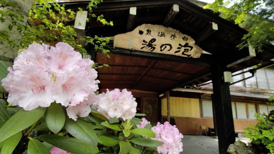 ・花に彩られる初夏の玄関