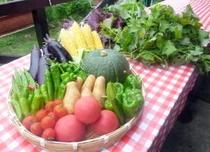 無農薬で野菜を自家栽培