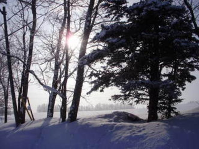 冬の散歩道(ほんとに我が家のすぐそば)