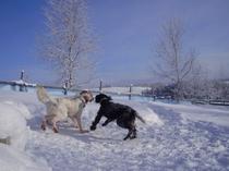 冬のドッグラン-4