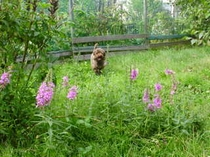 雑草の花と犬