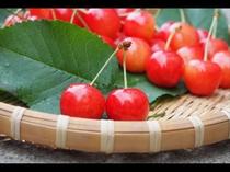 さくらんぼの旬は、6月頃から。まるで宝石のように輝く真っ赤な果実は、甘さと酸味のバランスが絶妙です。