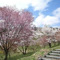 桜松公園 ~当ホテルから車で30分