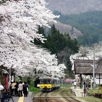 *桜咲く春満開の湯野上温泉駅