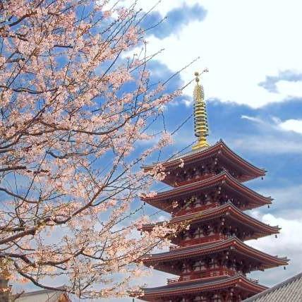 浅草寺と桜イメージ